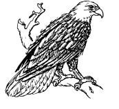 Bald_Eagle_(PSF)