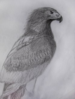 Drawing___Wedge_Tailed_Eagle_by_kekoaun.png