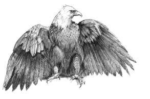 Eagle1 copy