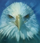 SAPULICH_EAGLE_OILWASH