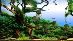 AGA-Aquascaping-Contest-Winner-best-in-show