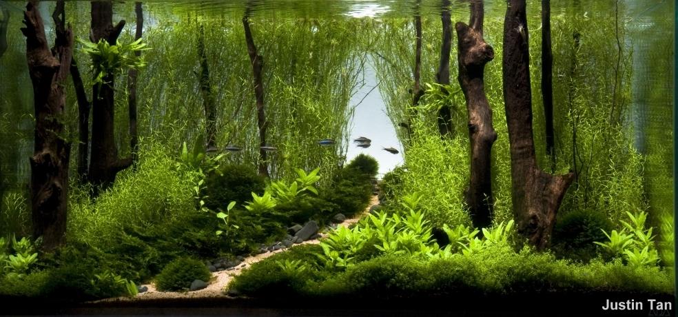 Aquascaping takashi amano and a nature aquarium - Iaplc Going Home Kaeru Aido Bonsai