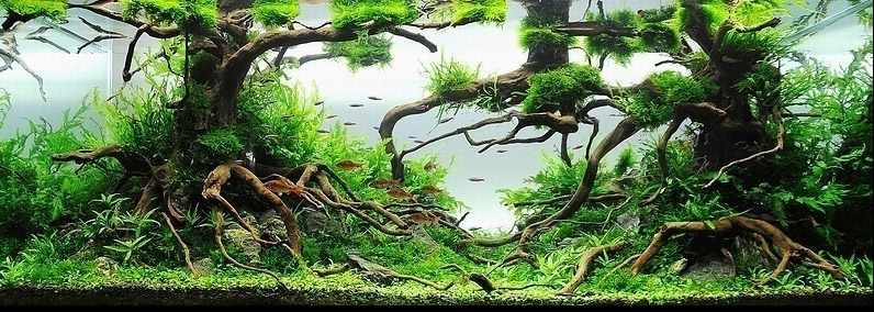 Michael G W Wong Enchanted Forest Aquascape Aido Bonsai
