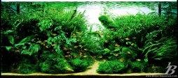 planted_Tank_Genesis