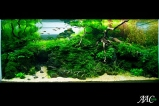 Top-10-Acuavida-Aquascaping-Contest-2010-Medium-Tank-1