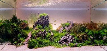 Top_10_International_Aquascaping_Contest_2009_101