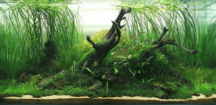 Top_10_International_Aquascaping_Contest_2009_31