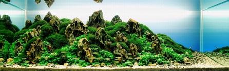 Top_10_International_Aquascaping_Contest_2009_41