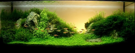 Top_10_International_Aquascaping_Contest_2009_61