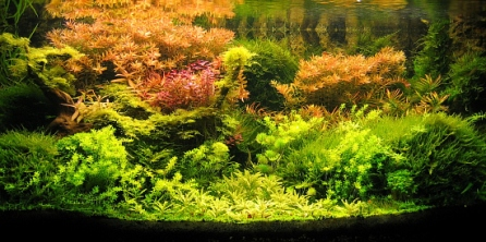 Top_10_International_Aquascaping_Contest_2009_71
