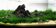 Top_10_International_Aquascaping_Contest_2009_81