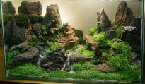 Top_10_International_Aquascaping_Contest_2009_91