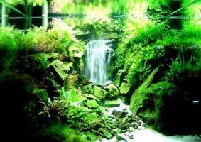 Waterfall__Aquarium_15Apr2011_020