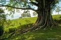 1103140728251old_tree