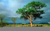 1339955886_deserttree_444143