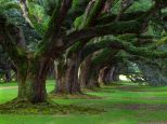 a-very-old-tree-grove--1309896007-7224