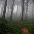 a_trail_in_the_forest_by_mnogueir