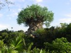 animal-kingdom-tree-of-life