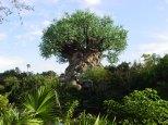 animal-kingdom-tree-of-life