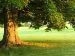 be-the-church--the-tree_2270_1024x768