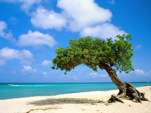 beach-tree-wallpaper