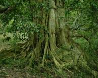 Beautiful-tree