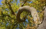 Cópia de tree