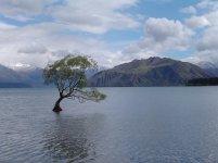 earth-tree_00224343