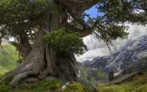 enormous_tree_wallpapers_28546_wallpaper_e092011-1920x1200