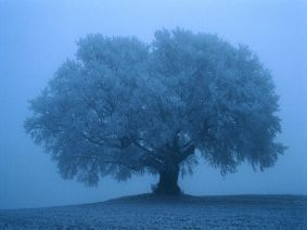 Foggy-Tree-1-C9STKQ84XZ-1024x768