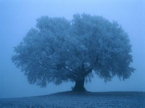 Foggy-Tree-1-C9STKQ84XZ-1024x768