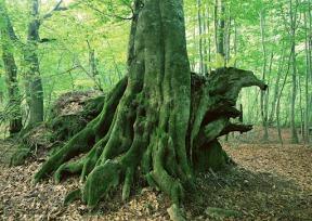 Free Tree Wallpaper (20)