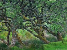 glengesh-pass-in-ireland-old-tree