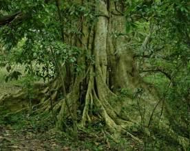 glorious-tree-01