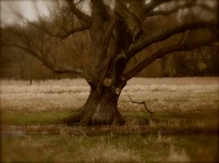 Marston tree