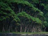 Mushroom-Looking-Tree-1-1QAR7OK1BP-1024x768