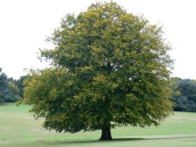 My favourite Tree