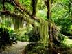 Old-Tree-landscape-1280x960