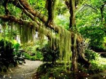Old-Tree-landscape-1281