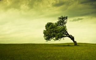 Old-tree