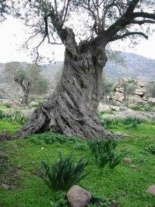 Old_Tree_19