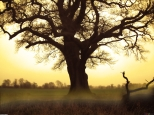old_tree_1_2400x1800