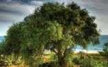 árvores incríveis, árvores antigas, as mais belas árvores, referência para bonsai, árvores bonsais, o melhor blog sobre bonsai, o melhor site sobre bonsai, paisagens incríveis, árvores naturais, floresta, árvores muito velhas, bonsai natural, árvores em flor, as estações do ano, outono, verão,amazing trees , old trees, the most beautiful trees , reference to bonsai, bonsai trees , the best blog about bonsai , the best site about bonsai , amazing landscapes , natural trees , forest trees are very old, natural bonsai trees in bloom , the seasons, fall, summer,árboles asombrosos , los árboles viejos , los árboles más hermosos , la referencia a los bonsai , árboles bonsái, el mejor blog acerca de los bonsai , el mejor sitio sobre bonsai , increíbles paisajes, árboles naturales , árboles forestales son muy antiguos y naturales los árboles bonsai en flor, los estaciones, otoño , verano,erstaunlich, Bäume, alte Bäume , die schönsten Bäume, Verweis auf Bonsai, Bonsai-Bäumen , die beste Blog über Bonsai, die beste Seite über Bonsai, unglaubliche Landschaften, natürliche Bäume, Wald Bäume sind sehr alt, natürliche Bonsai-Bäume in der Blüte, die Jahreszeiten, Herbst , Sommer,ต้นไม้ ที่น่าตื่นตาตื่นใจ , ต้นไม้ เก่าต้นไม้ ที่สวยที่สุด อ้างอิงถึง บอนไซ , ต้น บอนไซ,บล็อก ที่ดีที่สุด เกี่ยวกับ บอนไซ,เว็บไซต์ที่ดีที่สุด เกี่ยวกับ บอนไซ, ภูมิประเทศที่น่าตื่นตาตื่นใจ , ต้นไม้ ธรรมชาติ ต้นไม้ ป่า ที่อายุมาก ต้นบอนไซ ธรรมชาติใน บาน , ฤดูกาล ฤดูใบไม้ร่วง , ฤดูร้อน,