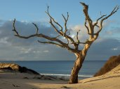 pakiri_tree-nigel_parker-1600x1200