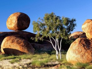 Rock-Besides-Tree
