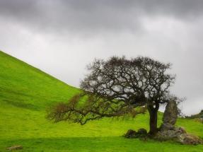 wallpaper-tree-single-tree