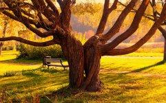 willow-tree-wallpaper