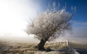 winter-tree-50423