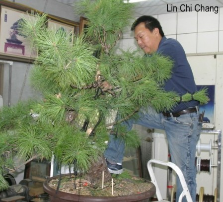 Lin,Shih-Chang