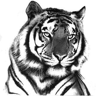 1-tiger-in-pencil-rahul-geetha-nair